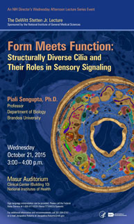 2015 Stetten Lecture poster - Form Meets Function: Structurally Diverse Cilia and Their Roles in Sensory Signalin