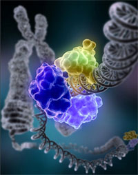 An enzyme encircles the double helix to repair a broken strand of DNA.