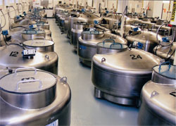 Coriell's cryogenic tanks filled with liquid nitrogen and millions of vials of frozen cells