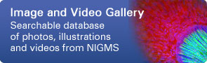 Image and Video Gallery: Searchable database of photos, illustrations ande videos from NIGMS