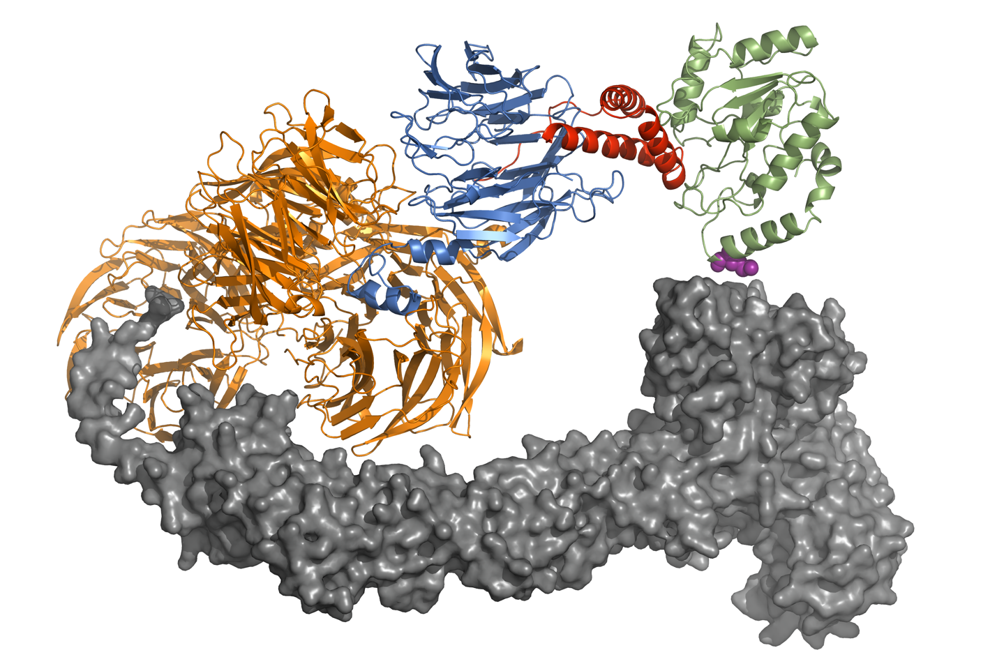 X-ray crystal structure of HIV-1 Vpr (red) in complex with uracil DNA glycosylase 2 (UNG2, green) and the Cul4-DCAF1 E3 ligase,