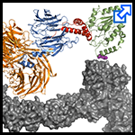 Pittsburgh Center for HIV Protein Interactions (PCHPI) Icon