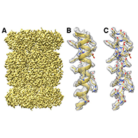 (A) Isosurface representation of the T20S map. (B) An a-helical segment from one ß subunit is shown in ribbon representation docked into the corresponding region of the reconstruction. (C) Same a-helical segment as in (B) shown in atom representation docked into the corresponding region of the reconstruction. Several water molecules are visible.
