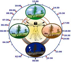 Biological clock. Credit: Wikimedia Commons