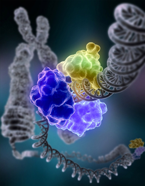 Cells repair damage to DNA using molecules, wrapping around DNA's double helix.