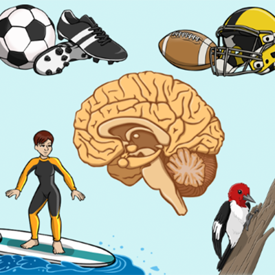 Bibliotech REBOUND: Beating Concussions Icon.